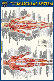 Anatomy of the Muscular System (Pocket-Sized Edition - 4x6 inches) (Miniature Edition) by Perez, Vincent, 9781423242727