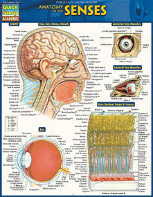 Anatomy of the Senses (QuickStudy Laminated Reference Guide) by BarCharts, Inc., 9781423234647