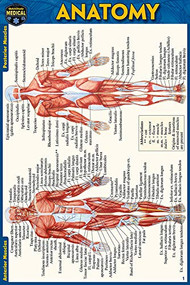 Anatomy Pocket-Sized Reference Guide (4x6 inches) (Miniature Edition) by Perez, Vincent, 9781423242666