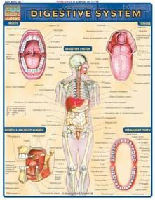 Digestive System by Perez, Vincent, 9781572225251