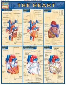 Heart - 9781572225374 by Perez, Vincent, 9781572225374