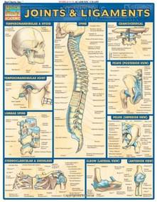 Joints & Ligaments by Perez, Vincent, 9781572226845
