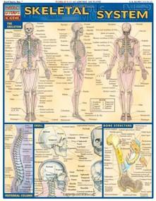 Skeletal System by Perez, Vincent, 9781572224957