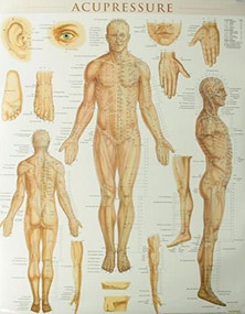 Acupressure Poster (22 x 28 inches) - Laminated (Anatomy of Points for Acupressure & Acupunture) by Perez, Vincent, 9781423222651