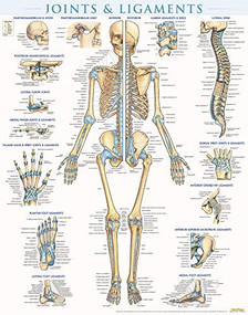 Joints & Ligaments Poster (22 x 28 inches) - Laminated (a QuickStudy Anatomy Reference) by Perez, Vincent, 9781423228714