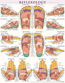 Reflexology Poster (22 x 28 inches) - Laminated (a QuickStudy Anatomy Reference) by Perez, Vincent, 9781423223078
