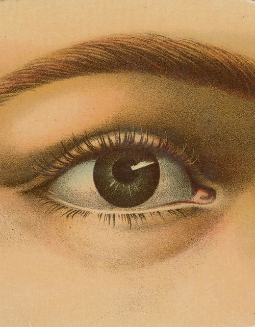 John Derian Picture Book by John Derian, 9781579656478