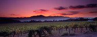Standard Photo Board: Vineyard At Sunset, Napa Valley - AMER