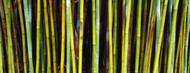 Standard Photo Board: Bamboo Trees - AMER