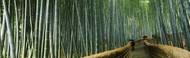 Extra Large Photo Board: Walkway Bamboo Forest Kyoto - AMER - INDY