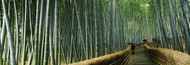 Standard Photo Board: Walkway Bamboo Forest Kyoto - AMER - INDY