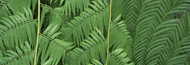Standard Photo Board: Ferns Botanical Gardens Buffalo Erie County - AMER - INDY