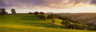 Standard Photo Board: Sheep Grazing Devon - AMER - INDY