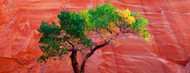 Standard Photo Board: Cottonwood Tree Escalante National Monument - AMER