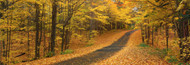 Extra Large Photo Board: Autumn Road Emery Park New York State - AMER