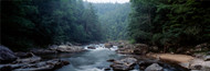 Extra Large Photo Board: Chattooga River Flowing Through Forest - AMER