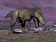 Aggressive Tyrannosaurus Rex Dinosaur Walking In The Desert II