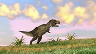 Tyrannosaurus Rex Hunting In An Open Field III