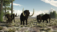 Woolly Mammoths In The Prehistoric Northern Hemisphere