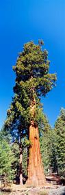 Sequoia National Park California, USA