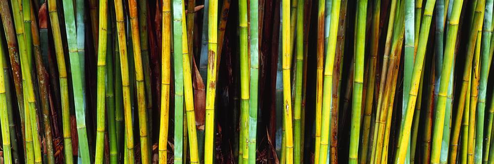 Bamboo Trees Walls 360