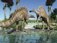 Two Ouranosaurus Grazing In A Stream