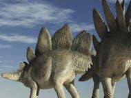Two Stegosaurus Against A Blue Sky