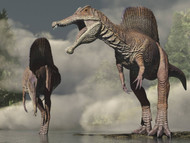 Two Spinosaurus Looking For Food