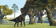 Brachiosaurus Dinosaurs Walk Among Large Trees In The Prehistoric Era
