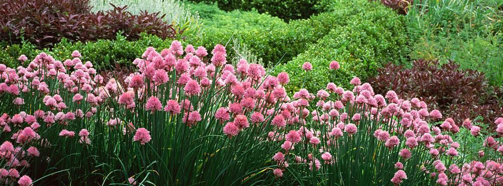 Flowering Plants Red Butte Garden Arboretum Walls 360