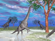 Brachiosaurus Dinosaurs Grazing On Trees