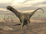 Large Argentinosaurus Dinosaur Walking On Rocky Terrain