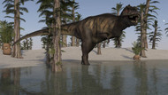 Tyrannosaurus Rex Hunting For Its Next Meal In Shallow Water