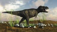 Tyrannosaurus Rex Walking Across Desert Terrain II