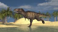 Tyrannosaurus Rex Running Through Shallow Water III