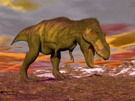 Aggressive Tyrannosaurus Rex Dinosaur Walking In The Desert I