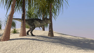 Tyrannosaurus Rex Hunting For Its Next Meal In The Desert II
