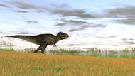 Tyrannosaurus Rex In A Grassy Field III