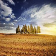 Sunset In A Golden Field With A Row Of Cypress Trees Italy Tuscany