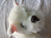 Keel Toys Cuddle Puppies - Westie