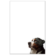 Bernese Mountain Dog Dog Pack 1