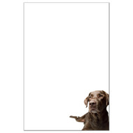 Chocolate Labrador Retriever Dog Pack 1
