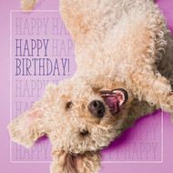 Zoe's Happy Happy Birthday Card