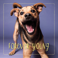 Rudy's Forever Young Happy Birthday Card