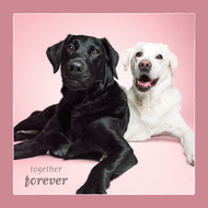 Labrador Retriever Together Forever Love Card