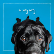 Tar's So Very Sorry Sympathy Card