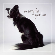 Kate's Sorry for your Loss Card