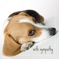 Dakota the Beagle Sympathy Card