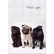 Pug Trio Boxed Thank You Notecards