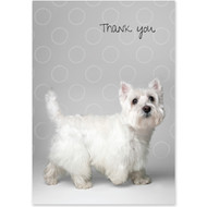 West Highland Terrier Boxed Thank You Notecards
